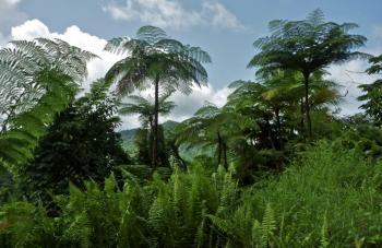 Domenica_Rainforest.jpg