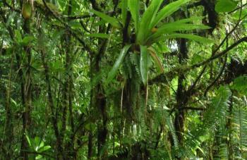 Domenica_Rainforest5.jpg